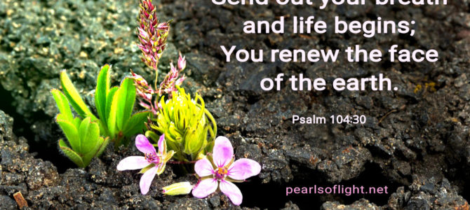 You renew the face of the earth (BL)