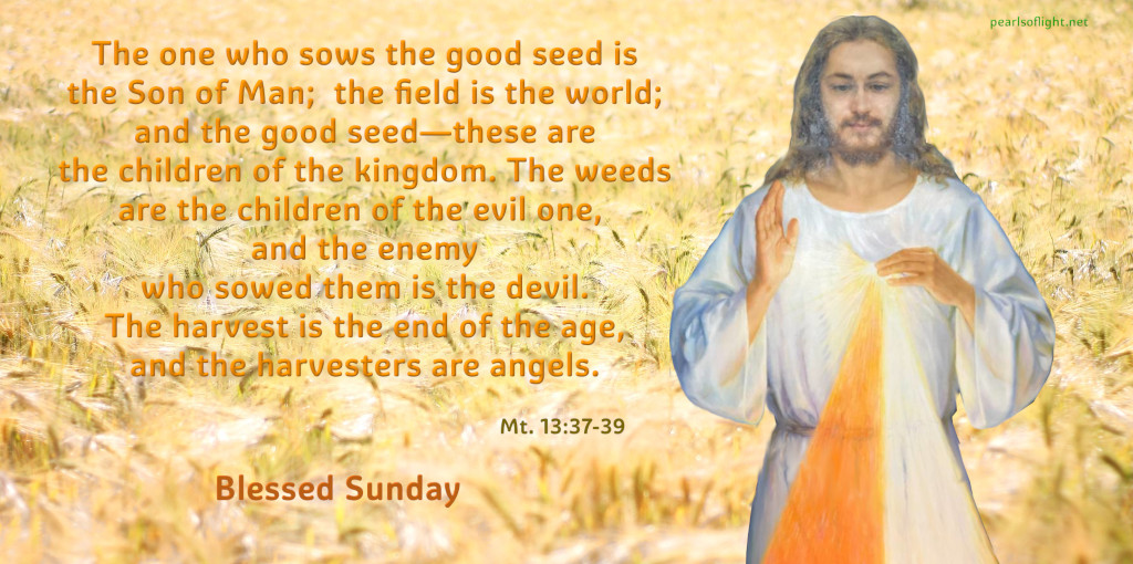 The one who sows the good seed is the Son of Man